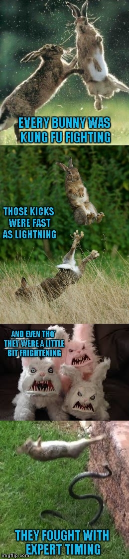 I had this song stuck in my head so now you get to as well...LOL | EVERY BUNNY WAS KUNG FU FIGHTING THOSE KICKS WERE FAST AS LIGHTNING AND EVEN THO' THEY WERE A LITTLE BIT FRIGHTENING THEY FOUGHT WITH EXPERT | image tagged in kung fu fighting,memes,funny animals,animals,funny,rabbits | made w/ Imgflip meme maker
