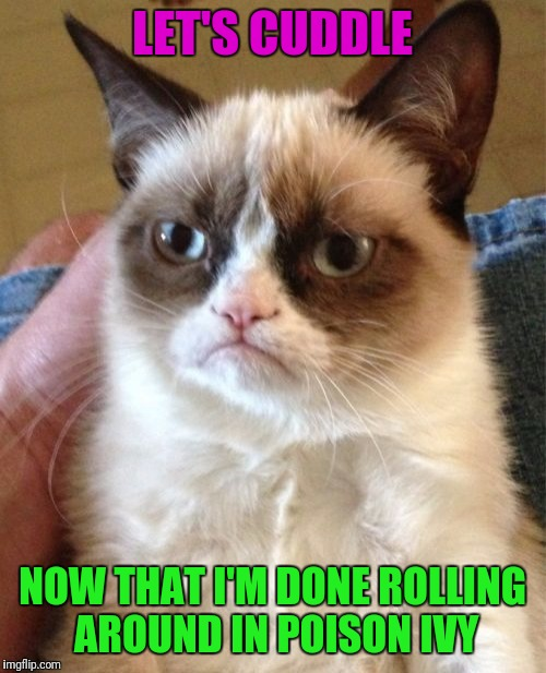 Cat Scratch Fever | LET'S CUDDLE NOW THAT I'M DONE ROLLING AROUND IN POISON IVY | image tagged in memes,grumpy cat,poison ivy,cuddle | made w/ Imgflip meme maker