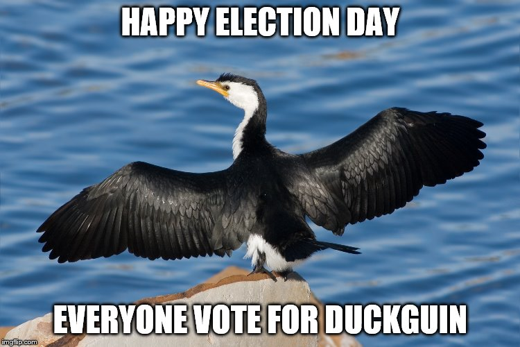 Duckguin | HAPPY ELECTION DAY EVERYONE VOTE FOR DUCKGUIN | image tagged in duckguin | made w/ Imgflip meme maker
