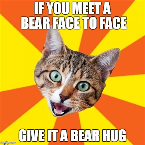 Bad Advice Cat |  IF YOU MEET A BEAR FACE TO FACE; GIVE IT A BEAR HUG | image tagged in memes,bad advice cat,bear hug,bear hugs,advice | made w/ Imgflip meme maker
