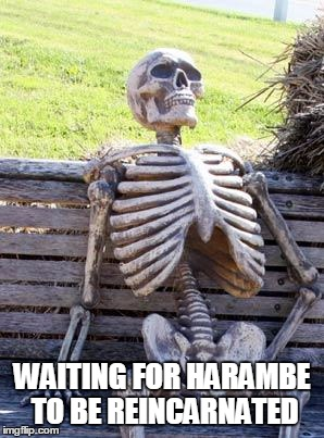 Waiting Skeleton Meme | WAITING FOR HARAMBE TO BE REINCARNATED | image tagged in memes,waiting skeleton | made w/ Imgflip meme maker