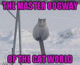 I don't know about you, but I'm impressed! | THE MASTER OOGWAY OF THE CAT WORLD | image tagged in balancing cat,memes,animals,cats,funny animals,master oogway | made w/ Imgflip meme maker