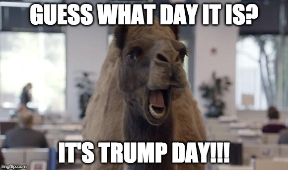 Honestly, didn't think it would happen. Glad it did.  Thank you to all those who supported President Elect Trump | GUESS WHAT DAY IT IS? IT'S TRUMP DAY!!! | image tagged in hump day camel,donald trump,hillary clinton,election,bacon,bernie sanders | made w/ Imgflip meme maker