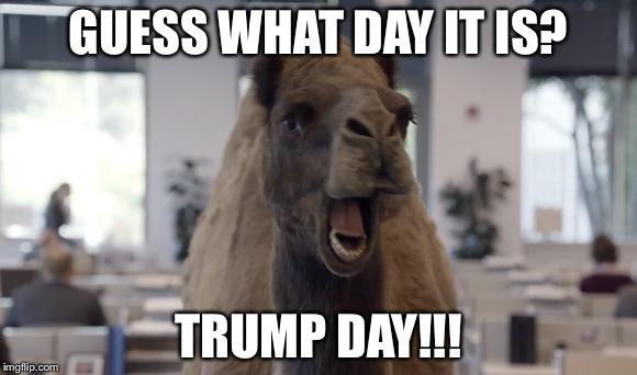 1dvagr hump day camel imgflip