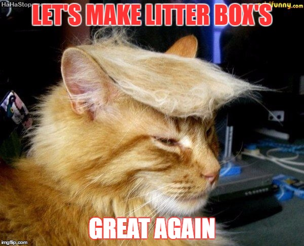donald trump cat |  LET'S MAKE LITTER BOX'S; GREAT AGAIN | image tagged in donald trump cat | made w/ Imgflip meme maker