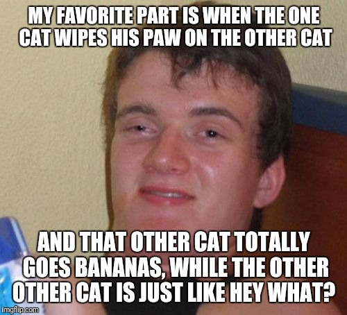 10 Guy Meme | MY FAVORITE PART IS WHEN THE ONE CAT WIPES HIS PAW ON THE OTHER CAT AND THAT OTHER CAT TOTALLY GOES BANANAS, WHILE THE OTHER OTHER CAT IS JU | image tagged in memes,10 guy | made w/ Imgflip meme maker