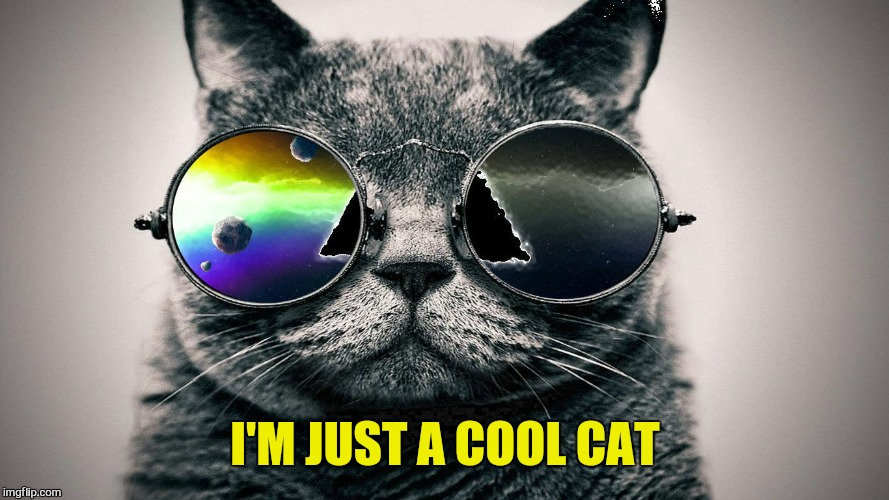 I'M JUST A COOL CAT | made w/ Imgflip meme maker
