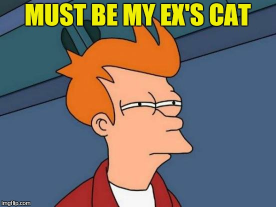 Futurama Fry Meme | MUST BE MY EX'S CAT | image tagged in memes,futurama fry | made w/ Imgflip meme maker