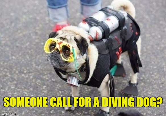 SOMEONE CALL FOR A DIVING DOG? | made w/ Imgflip meme maker