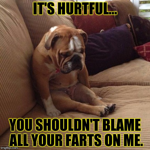 sad dog | IT'S HURTFUL... YOU SHOULDN'T BLAME ALL YOUR FARTS ON ME. | image tagged in sad dog | made w/ Imgflip meme maker