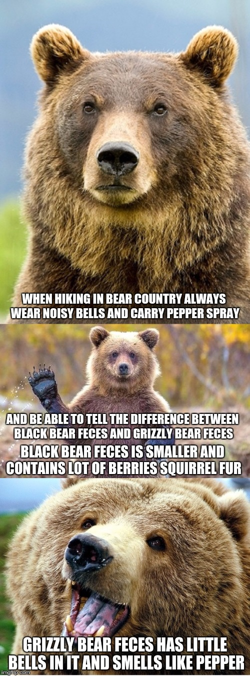 BAD PUN BEAR | WHEN HIKING IN BEAR COUNTRY ALWAYS WEAR NOISY BELLS AND CARRY PEPPER SPRAY GRIZZLY BEAR FECES HAS LITTLE BELLS IN IT AND SMELLS LIKE PEPPER  | image tagged in bad pun bear | made w/ Imgflip meme maker