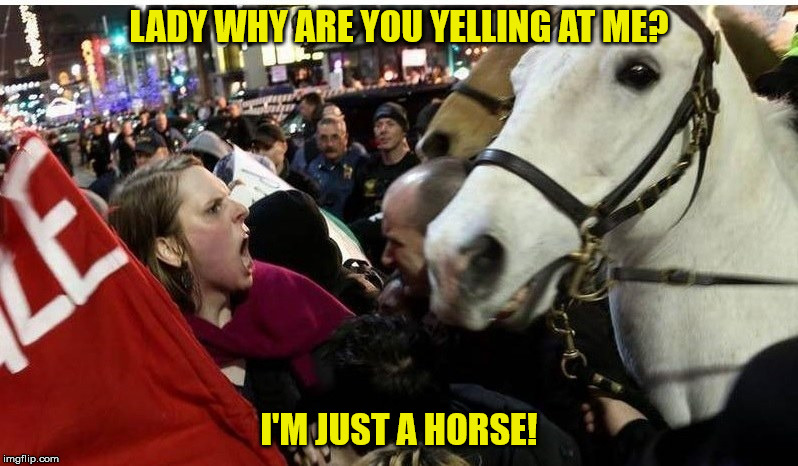protestor horse | LADY WHY ARE YOU YELLING AT ME? I'M JUST A HORSE! | image tagged in protestor horse | made w/ Imgflip meme maker