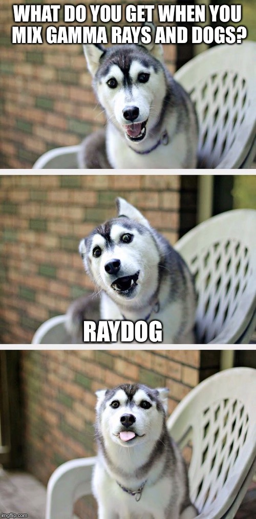Bad Pun Dog 2 | WHAT DO YOU GET WHEN YOU MIX GAMMA RAYS AND DOGS? RAYDOG | image tagged in bad pun dog 2 | made w/ Imgflip meme maker