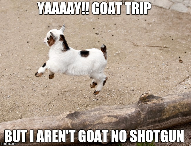 YAAAAY!! GOAT TRIP; BUT I AREN'T GOAT NO SHOTGUN | image tagged in goat,roadtrip,trip,shotgun | made w/ Imgflip meme maker