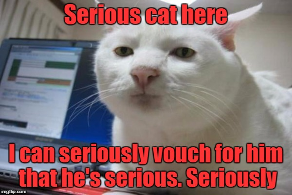 Serious cat here I can seriously vouch for him that he's serious. Seriously | made w/ Imgflip meme maker
