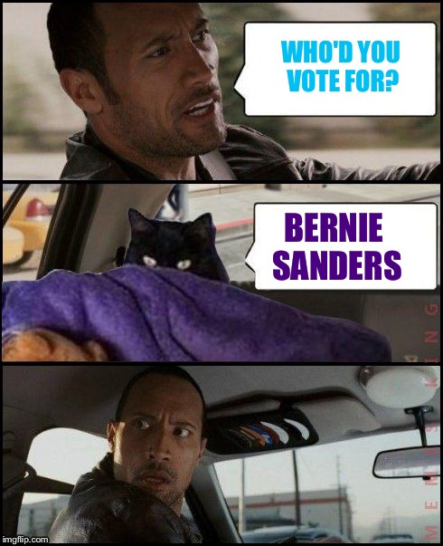 The Rock Driving Evil Cat | WHO'D YOU VOTE FOR? BERNIE SANDERS | image tagged in the rock driving evil cat | made w/ Imgflip meme maker
