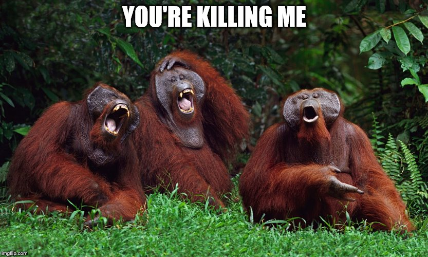 laughing orangutans | YOU'RE KILLING ME | image tagged in laughing orangutans | made w/ Imgflip meme maker