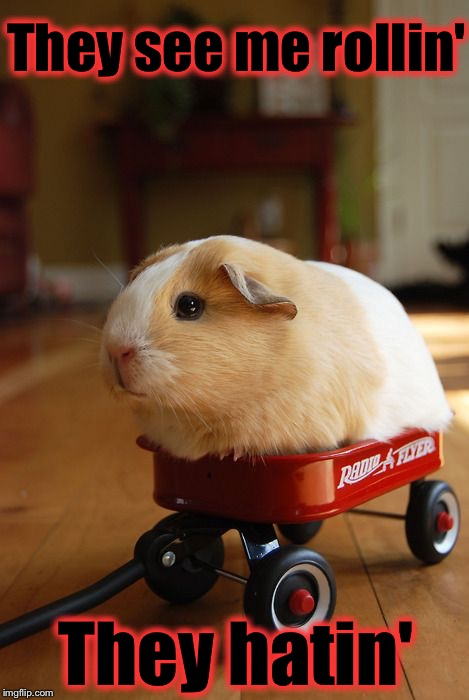 Patrolling they tryin to catch me ridin dirty | They see me rollin' They hatin' | image tagged in guinea pig in wagon,memes,evilmandoevil,repost,funny | made w/ Imgflip meme maker