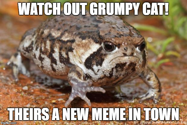 look out! | WATCH OUT GRUMPY CAT! THEIRS A NEW MEME IN TOWN | image tagged in memes,grumpy toad,look out | made w/ Imgflip meme maker