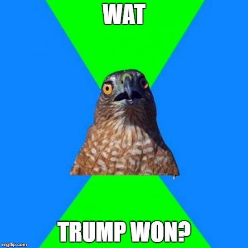 wat? | WAT TRUMP WON? | image tagged in memes,hawkward,trump | made w/ Imgflip meme maker