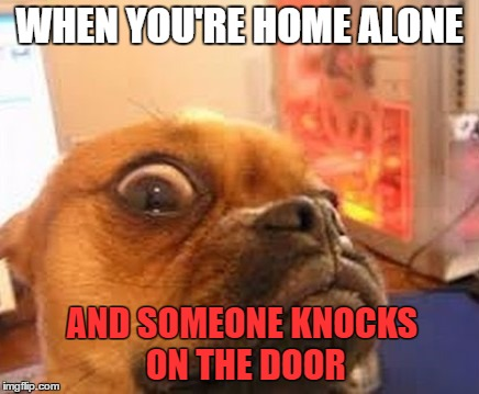 When I'm Alone  | WHEN YOU'RE HOME ALONE AND SOMEONE KNOCKS ON THE DOOR | image tagged in what the dog,knock knock,who's,there,shitting me,help me | made w/ Imgflip meme maker
