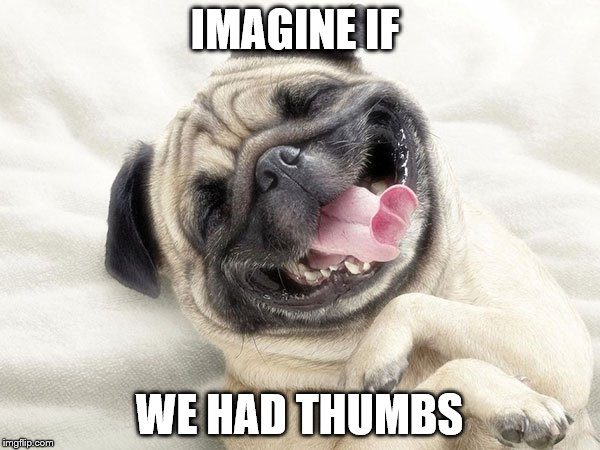 IMAGINE IF WE HAD THUMBS | made w/ Imgflip meme maker