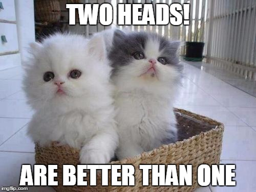 Cats Twins |  TWO HEADS! ARE BETTER THAN ONE | image tagged in memes,cats | made w/ Imgflip meme maker