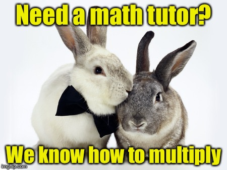 rabbits couple | Need a math tutor? We know how to multiply | image tagged in rabbits couple | made w/ Imgflip meme maker