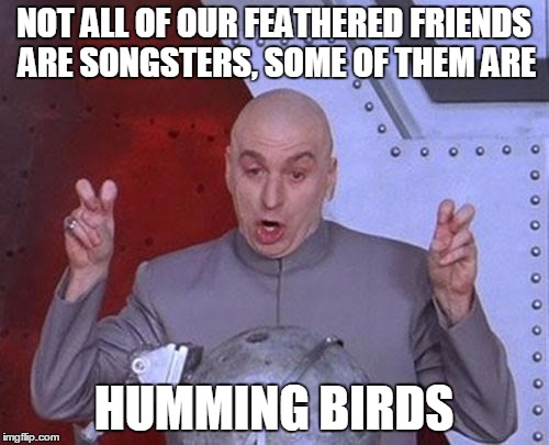 Dr Evil Laser Meme | NOT ALL OF OUR FEATHERED FRIENDS ARE SONGSTERS, SOME OF THEM ARE HUMMING BIRDS | image tagged in memes,dr evil laser | made w/ Imgflip meme maker
