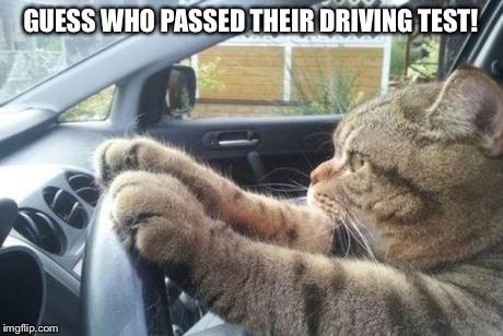 1e7b5x cat driving 1 memes imgflip