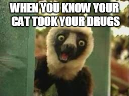 Zoboomafoo | WHEN YOU KNOW YOUR CAT TOOK YOUR DRUGS | image tagged in zoboomafoo | made w/ Imgflip meme maker