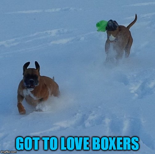 GOT TO LOVE BOXERS | made w/ Imgflip meme maker