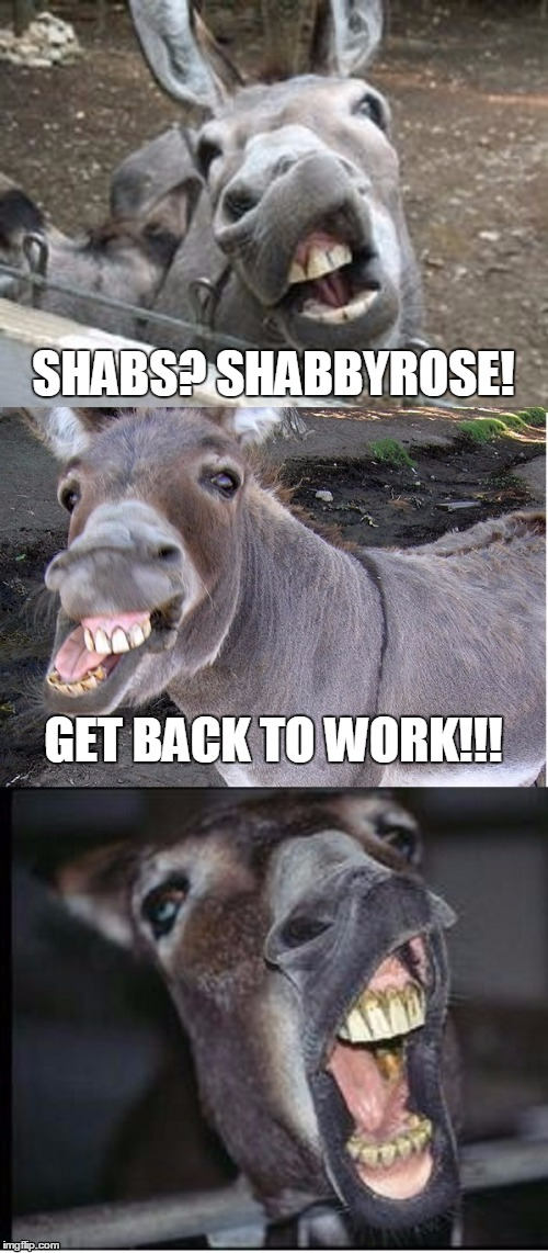 SHABS? SHABBYROSE! GET BACK TO WORK!!! | made w/ Imgflip meme maker