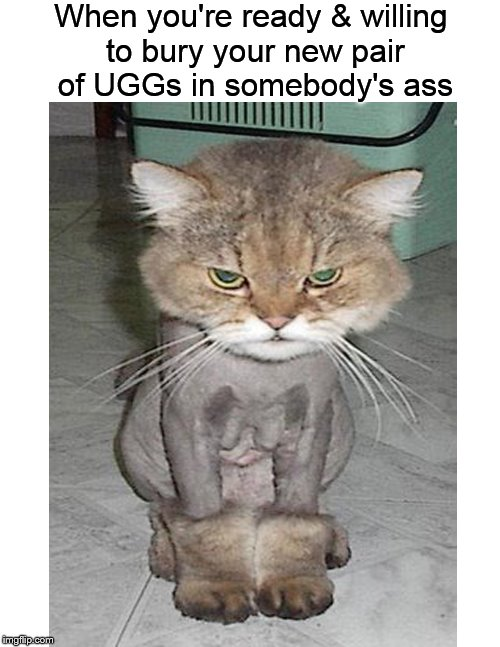 Yeah, they're expensive, but oh well.... |  When you're ready & willing to bury your new pair of UGGs in somebody's ass | image tagged in funny memes,uggs,cat,boots,angry cat | made w/ Imgflip meme maker