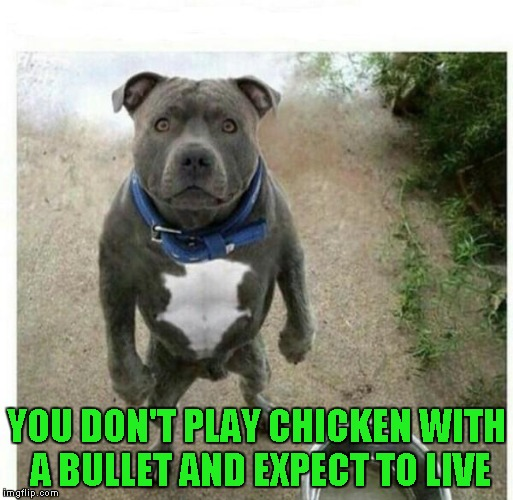 YOU DON'T PLAY CHICKEN WITH A BULLET AND EXPECT TO LIVE | made w/ Imgflip meme maker