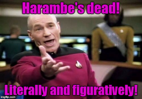 Picard Wtf Meme | Harambe's dead! Literally and figuratively! | image tagged in memes,picard wtf | made w/ Imgflip meme maker