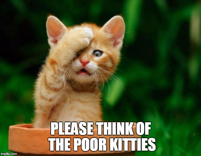 Surprised Kitty | PLEASE THINK OF THE POOR KITTIES | image tagged in surprised kitty | made w/ Imgflip meme maker