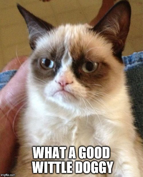 Grumpy Cat Meme | WHAT A GOOD WITTLE DOGGY | image tagged in memes,grumpy cat | made w/ Imgflip meme maker