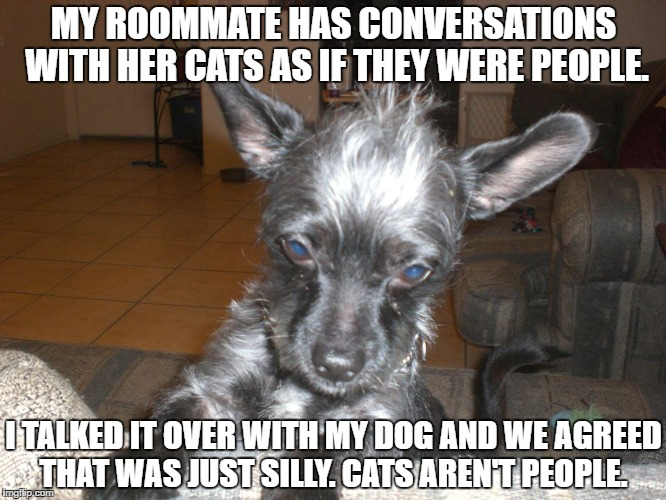 My Dog |  MY ROOMMATE HAS CONVERSATIONS WITH HER CATS AS IF THEY WERE PEOPLE. I TALKED IT OVER WITH MY DOG AND WE AGREED THAT WAS JUST SILLY. CATS AREN'T PEOPLE. | image tagged in dogs,cats,pets | made w/ Imgflip meme maker