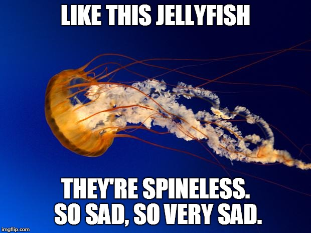 Like this Jellyfish | LIKE THIS JELLYFISH THEY'RE SPINELESS. SO SAD, SO VERY SAD. | image tagged in jellyfish,spineless,sad | made w/ Imgflip meme maker