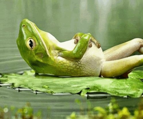 chilling out frog blank template imgflip
