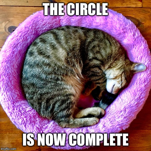 Cat nap | THE CIRCLE IS NOW COMPLETE | image tagged in cats,star wars,cat nap,crying because of cute,kittens,adorable | made w/ Imgflip meme maker