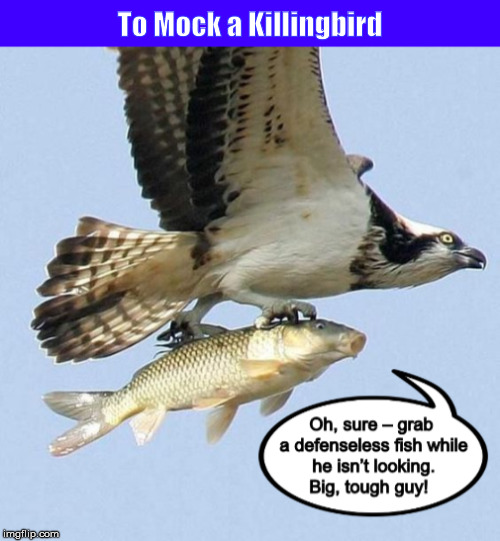 To Mock a Killingbird  (from a Bizarro cartoon) | image tagged in to kill a mockingbird,to mock a killingbird,to mock a killing bird,bizarro,funny,memes | made w/ Imgflip meme maker