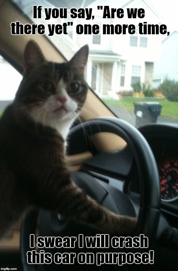 "JoJo The Driving Cat | Template By ghostofchurch | If you say, ""Are we there yet"" one more time, I swear I will crash this car on purpose! 