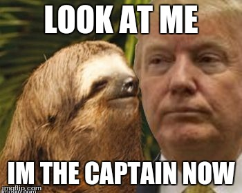 Political advice sloth | LOOK AT ME IM THE CAPTAIN NOW | image tagged in political advice sloth | made w/ Imgflip meme maker