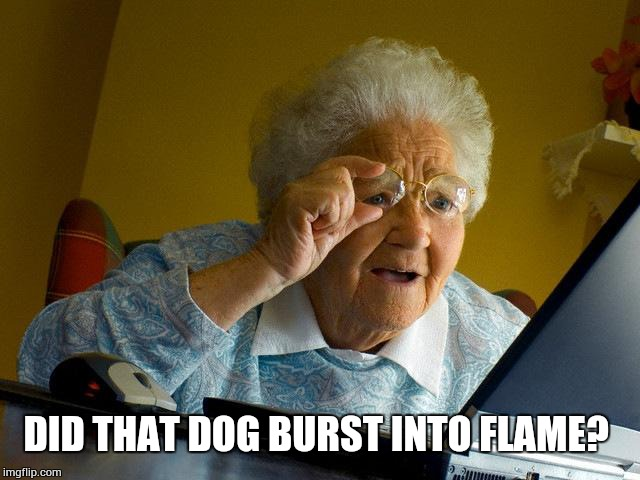 Grandma Finds The Internet Meme | DID THAT DOG BURST INTO FLAME? | image tagged in memes,grandma finds the internet | made w/ Imgflip meme maker