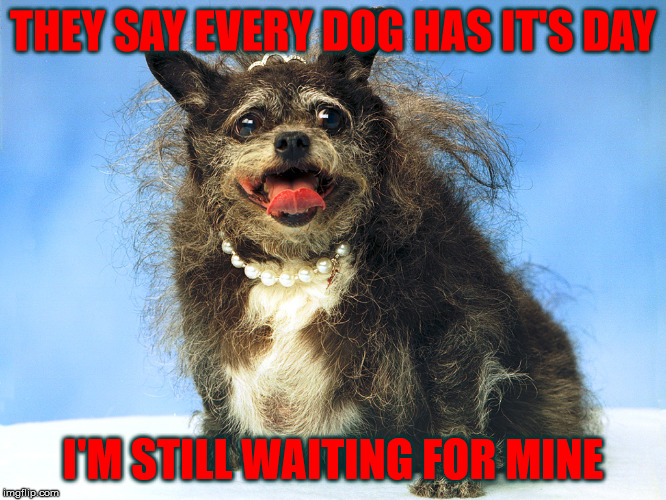 Every Dog Has It's Day | THEY SAY EVERY DOG HAS IT'S DAY I'M STILL WAITING FOR MINE | image tagged in ugly dog,ain't she purdy,every dog has its day,is this a clue,a mythical tag | made w/ Imgflip meme maker