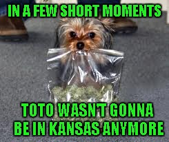Sometimes you just need to get away for awhile... | IN A FEW SHORT MOMENTS TOTO WASN'T GONNA BE IN KANSAS ANYMORE | image tagged in dog with pot,memes,funny animals,funny,dogs,raydog | made w/ Imgflip meme maker
