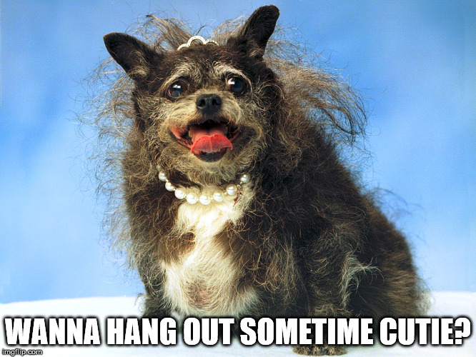 Ugly Dog | WANNA HANG OUT SOMETIME CUTIE? | image tagged in ugly dog | made w/ Imgflip meme maker