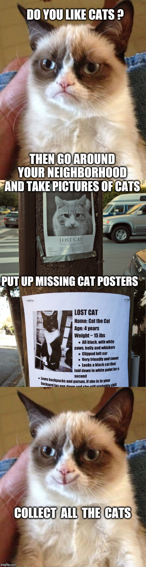 Very Simple Formula to a Cat filled Life  | DO YOU LIKE CATS ? THEN GO AROUND YOUR NEIGHBORHOOD AND TAKE PICTURES OF CATS PUT UP MISSING CAT POSTERS COLLECT  ALL  THE  CATS | image tagged in cats,grumpy cat,happy grumpy cat,crazy cat lady | made w/ Imgflip meme maker